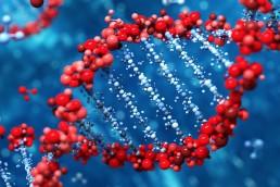 Success DNA